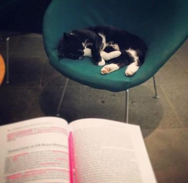 Jordan, aka Library Cat, snoozes in his favourite chair.
