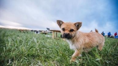 Gobi arrived in Edinburgh last week after four months in quarantine.