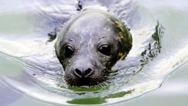 Seal: Concerns over underwater noise (file pic).
