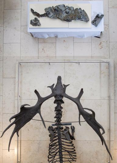 The fossil has been unveiled to the public for the first time 50 years after it was discovered.