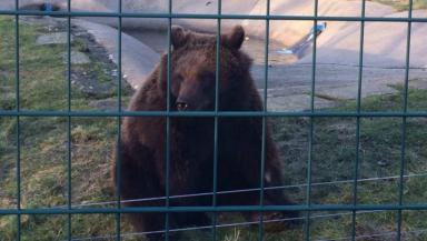 New arrival: One of the three bears settling in at Camperdown.
