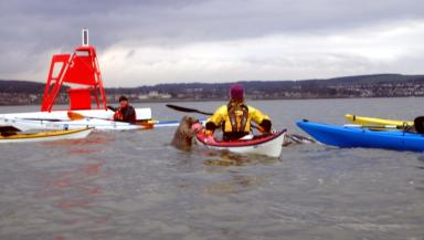 Forth: The mammal greeted some of the other kayakers.