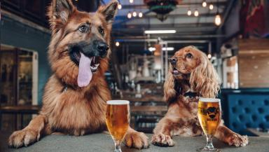 BrewDogs: Craft beer company offers paid leave to dog owners.