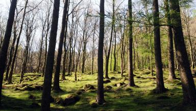 Spring is a perfect season for woodland walking.