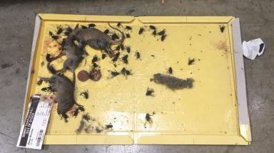 Dead mice and flies found in the Enfield food delivery depot.