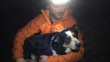 In safe hands: Sheepdog Nell had gone missing 12 days ago.