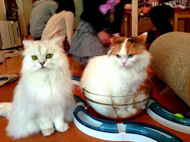 Cat cafes have proved popular with tourists.