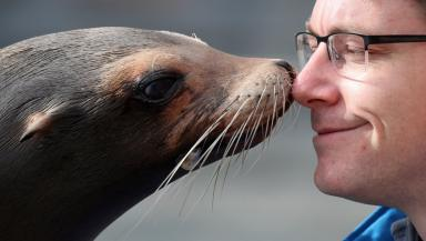 Bella: Sea lion gives keeper Alex Wainwright a kiss.