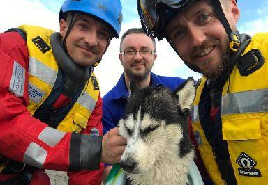 Dog Rescue Irvine Ayrshire