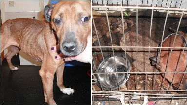 Dogs: Mitzi, Sugar and Kane were kept in filthy conditions.
