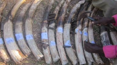 Many elephants are still killed for their tusks and Mr Lotter was dedicated to stopping this awful poaching trade