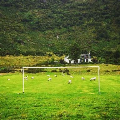 Sheep spotted partaking in a game of 'footbaa' in Arran.