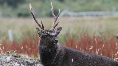 Summer stag: Handsome chap captured in Wester Ross.