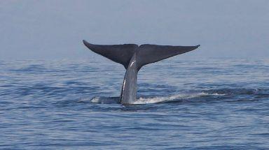 Bridge deck: Each section around four times heavier than a blue whale.