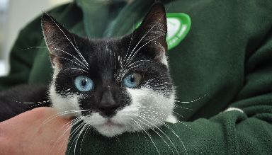 Rehome: The charity do their best to find forever homes for the cats and dogs.