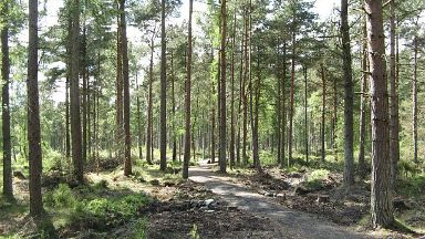 Devilla Forest: Man aged between 30 and 45.