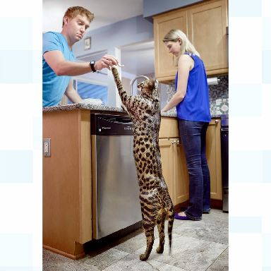 The world's tallest Cat with its owners William and Lauren Powers.