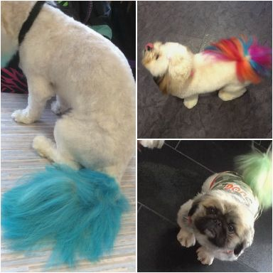 The salon offers tail dye treatments.