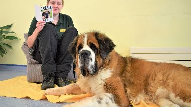 Big heart: Jackson is currently in the care of the Dogs Trust.