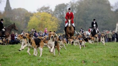 Hunting: Banned in Scotland since 2002 (file pic).