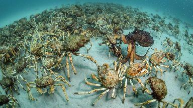 Crab surprise by Justin Gilligan, winner of the Behaviour: Invertebrates.
