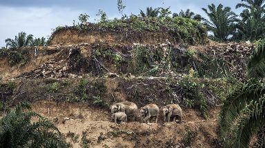 Palm-oil survivors by Aaron Gekoski, winner of the Wildlife Photojournalist: Single image.