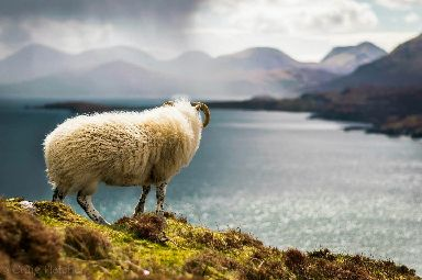 One of the locals soaking in the view from Ben Tianavaig.