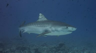 John Craig said he was followed by a tiger shark.