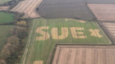 The mysterious letters in the field sparked a search for 'Sue'.