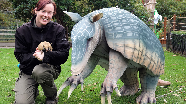 Inti: Armadillo meets sculpture along with keeper Amy Smith.