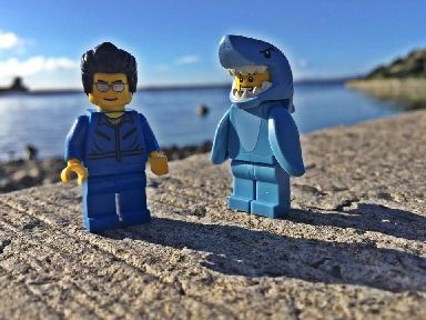 Thankfully this morning's call-out to reports of a shark at the coast turned out to be a false alarm.