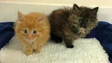 Adoption: The kittens, named Harry and Meghan, are looking for their forever home.