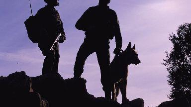A Belgian shepherd service dog