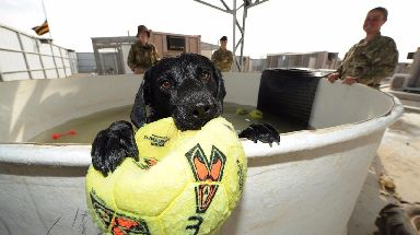 Camp Bastion in Afghanistan had its own kennels equipped with a vet's surgery