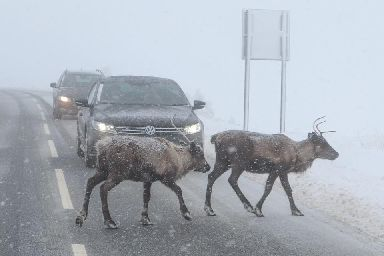 Traffic in the Highlands.