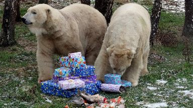 Presents: The bears enjoyed their hot dogs and sardines.