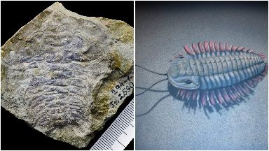 Discovery: The fossil and a reconstruction of what a trilobite may have looked like.