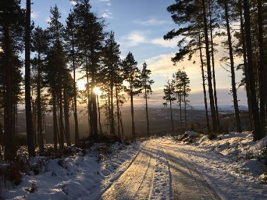 The sun rising among the trees on a snowy day in Blackfold near Inverness.
