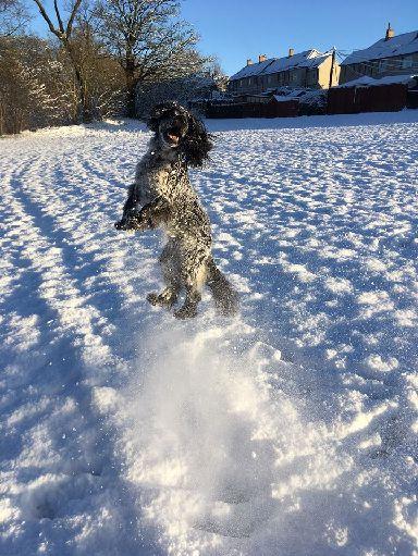 Louis loving the snow in Carluke.
