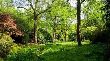Just 10% of England is covered by woodland.