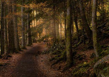 Enchanted forest walks through Faskally woods.
