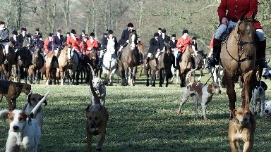Fox hunting: Illegal to let dogs kill quarry in Scotland (file pic).