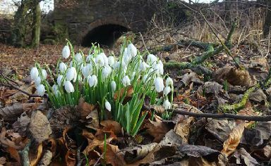 Spring: The snowdrop signals that the winter weather is coming to an end.