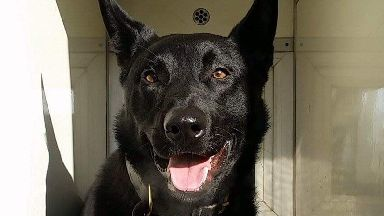 PD Remo: Boys arrested after dog called in.