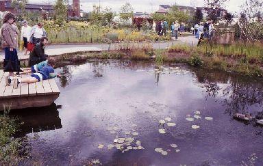 The Oor Wullie Wildlife garden.