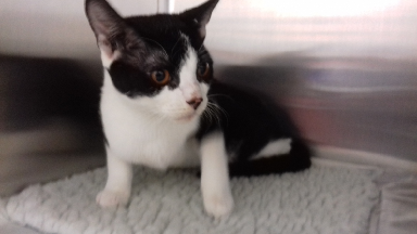 Dusty: Male cat suffered from brain condition.