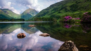 The rhododendrons were out in bloom at Lochan Urr in Glen Etive.