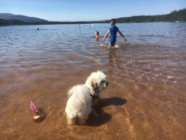 Loch Morlich: A dog cooling down in the water.