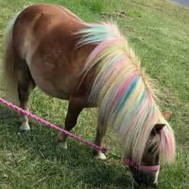 Some have likened pony painting to painting children's faces.