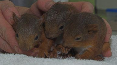 Squirrels: Rescued in Stirling.